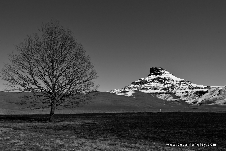 Berg and tree bw