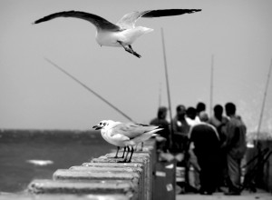 Sea Gulls on the Pier in Durban