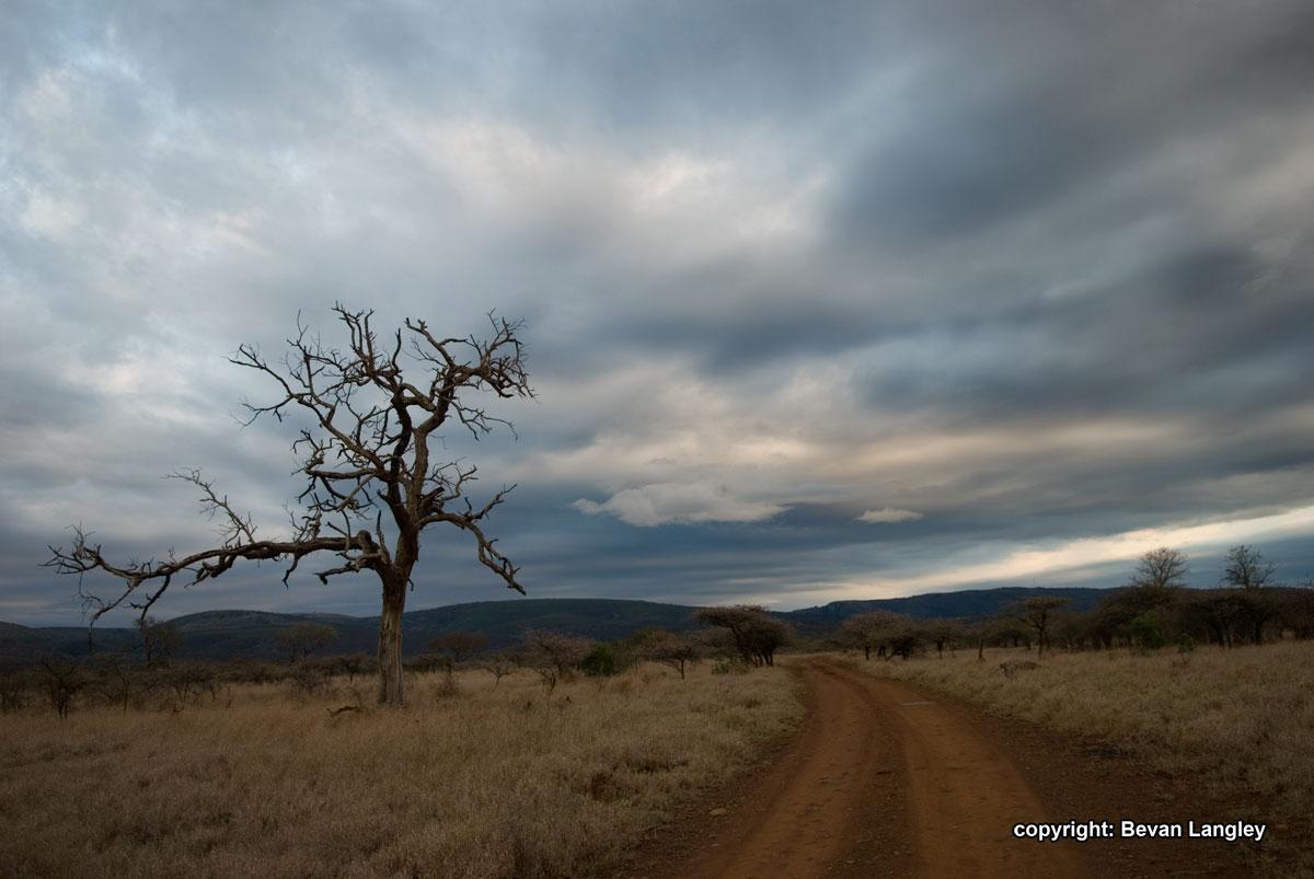 The-Mkhuzi-Wilderness